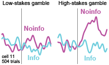 An orbitofrontal cortex neuron signaling the greater value of information for high-stakes gambles!